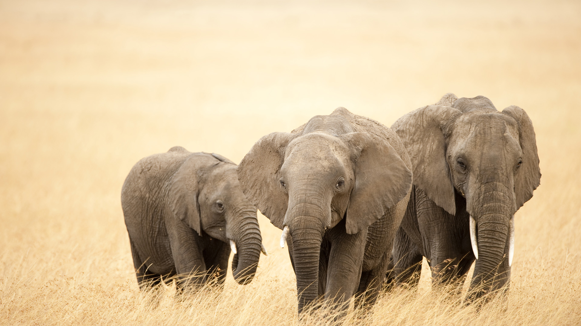 Tribal Elephant   mandala in 2018  Pinterest  코끼리 동물