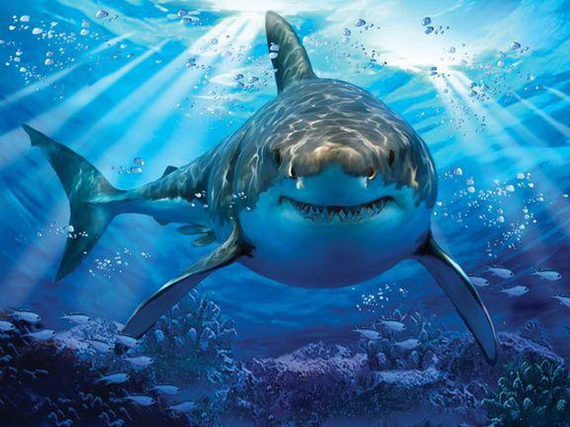 Белая акула: сколько весит и какой длины самая большая белая акула в мире