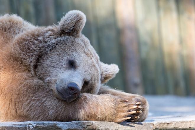 ТОП-9 животных, которые просыпаются весной после спячки