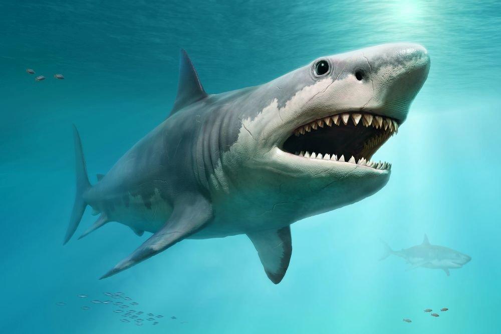 Акула мегалодон: где обитает, какие размеры и существует ли