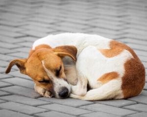 Что нужно знать о стерилизации собак