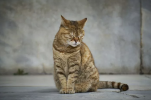 Кошачья депрессия — причины