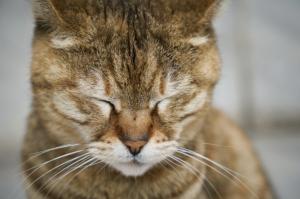 кошачья депрессия