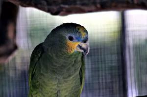 Как приручить попугая — советы