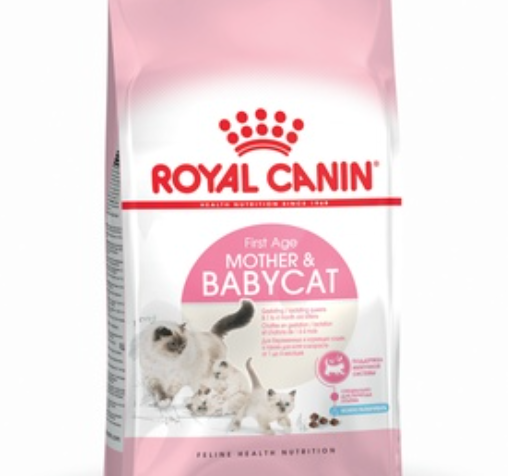 Как выбрать корм для котят и для беременных кошек